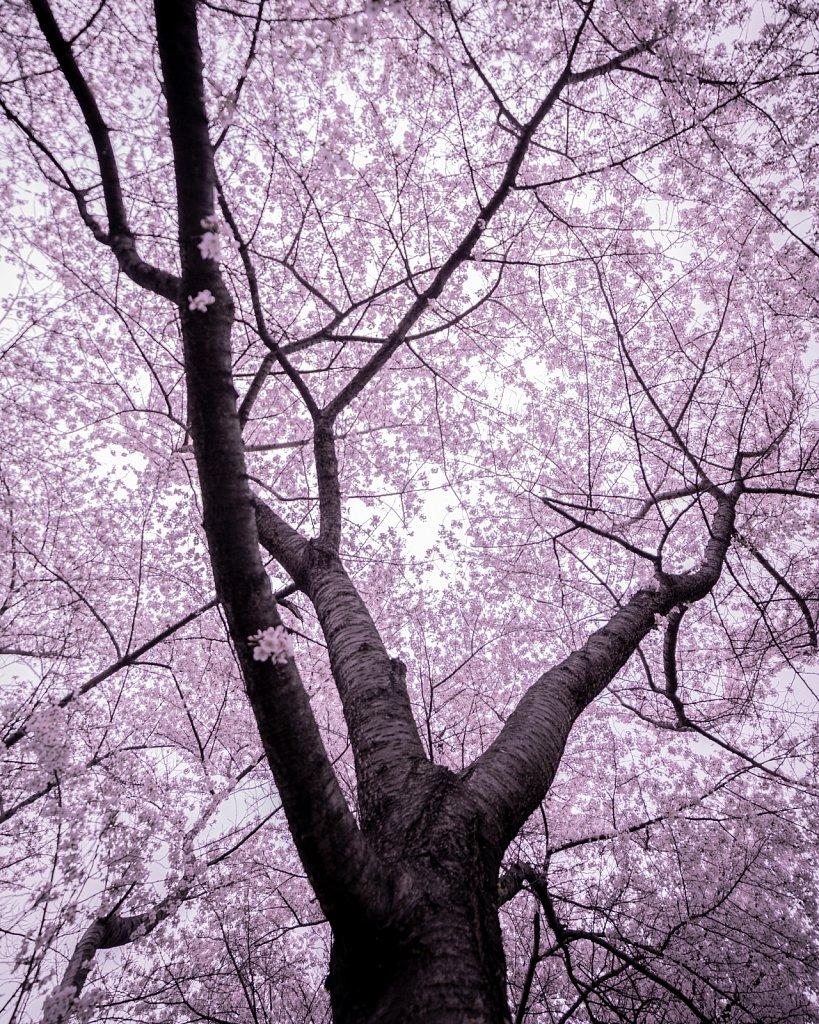Under a Pink Sky